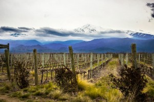 Wondeful vineyards at the foot of the Andes
